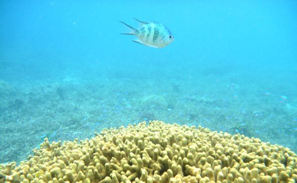 a.fish