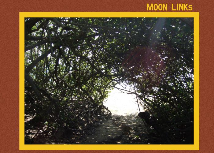 moonlinks2